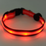 Led collar for my dog – it's amazing