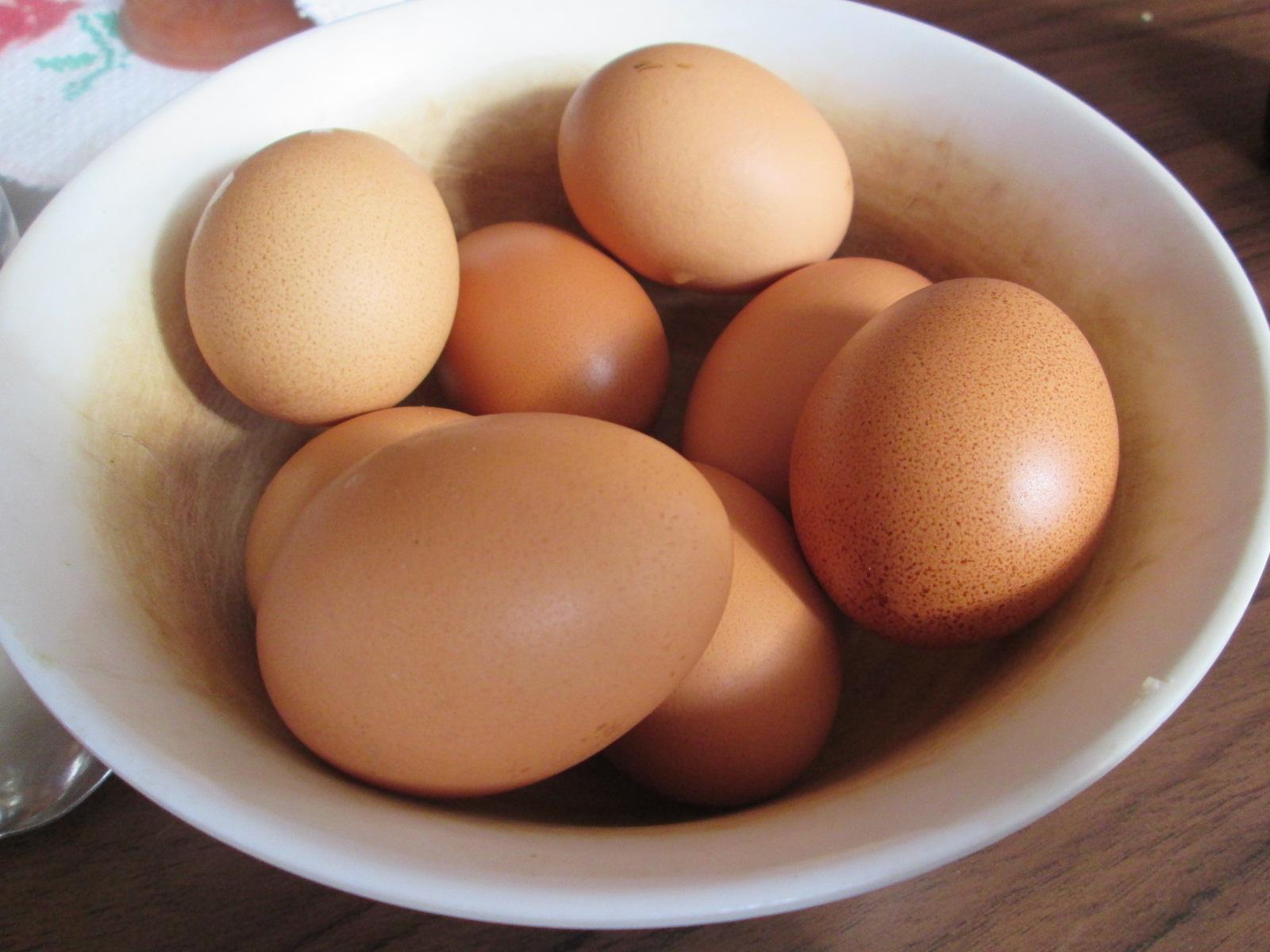 egg - health food